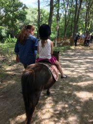 Balade à poney transhumance Aix les Milles