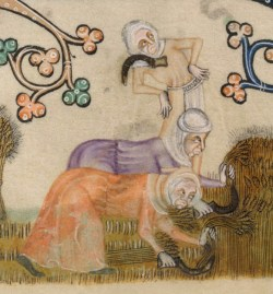 Woman harvesting while wearing cotes and head wraps, c. 1325-1340