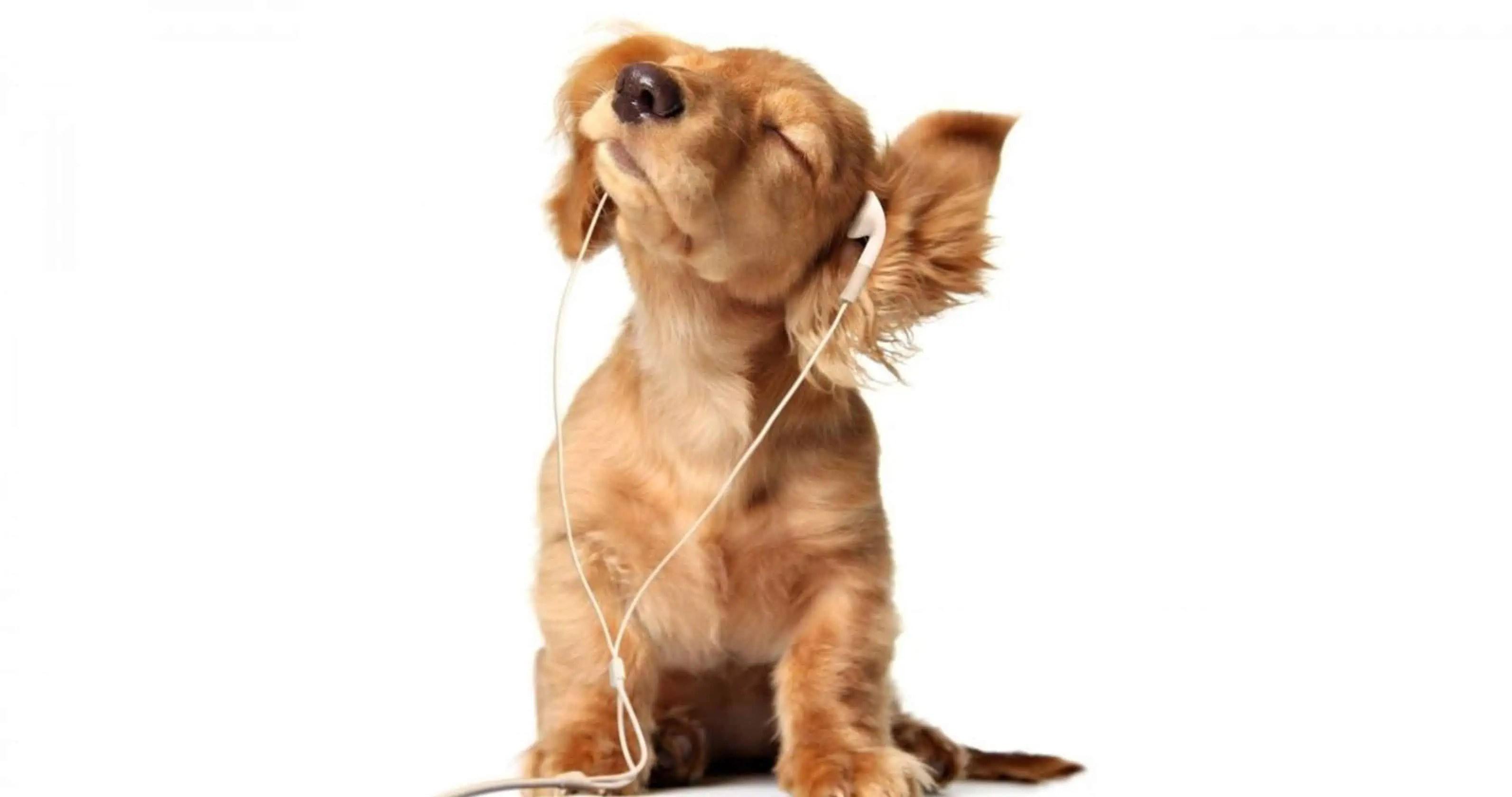 puppy-music_wallpprs.com_