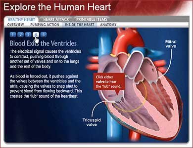 Explore the Human Heart