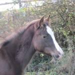 elevage de chevaux en auvergne rhone alpes