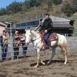 étalon poney des amériques disponible pour saillie