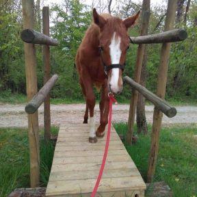 chevaux pour équitation western à vendre au puy en velay 43