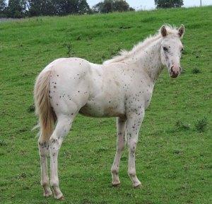 cheval à vendre en auvergne