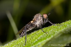 Fly shot without a diffused flash