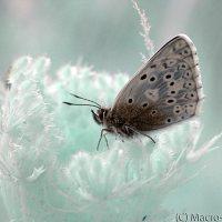 Portland Butterflies