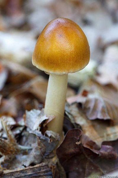 Fungi in leaf litter