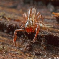 Pseudoscorpion, Pano Centipede and a Ground Bug.