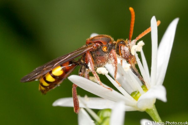 Nomanda Bee on Ramsom