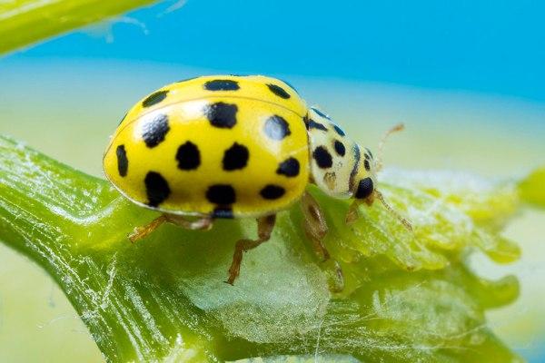 22 Spot Ladybird by Gordon Zammit (2)