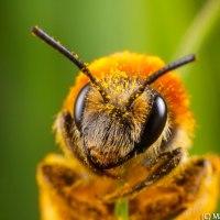 Minor Bee Rework