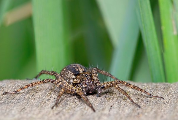 Spider - 3 Images Stacked @ F11