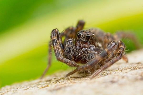 Single Shot of Spider
