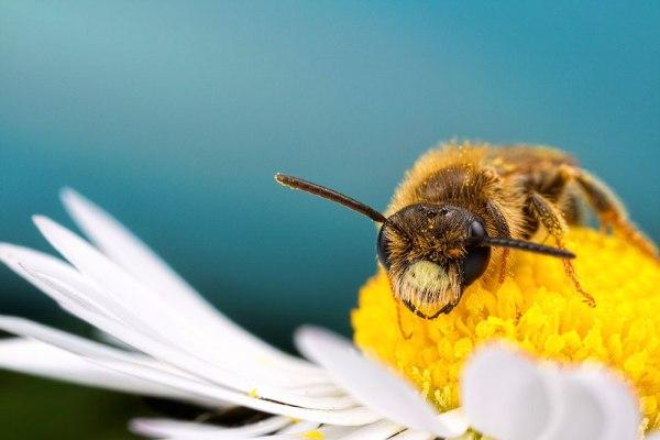 Bee Lazy