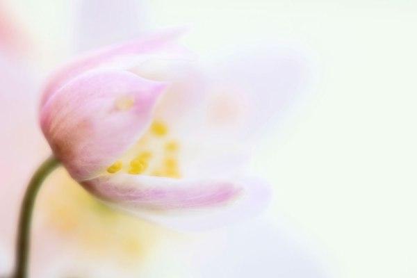 Spring Softly Starts