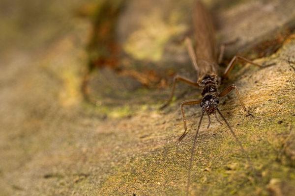 Long Bug