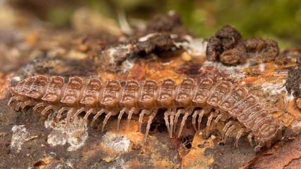 Centipede Stack