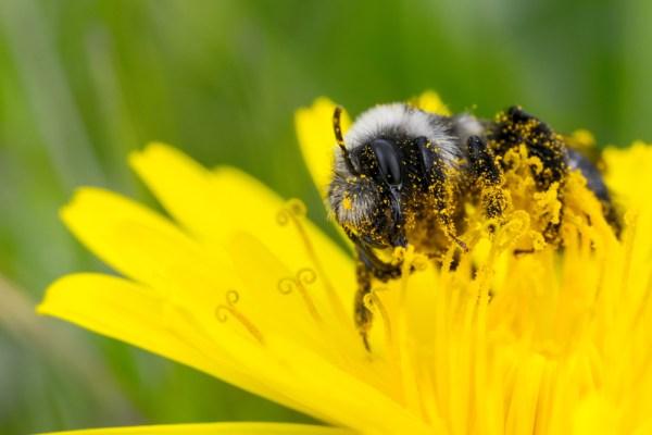 Mining the Pollen