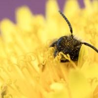 Bee Overload