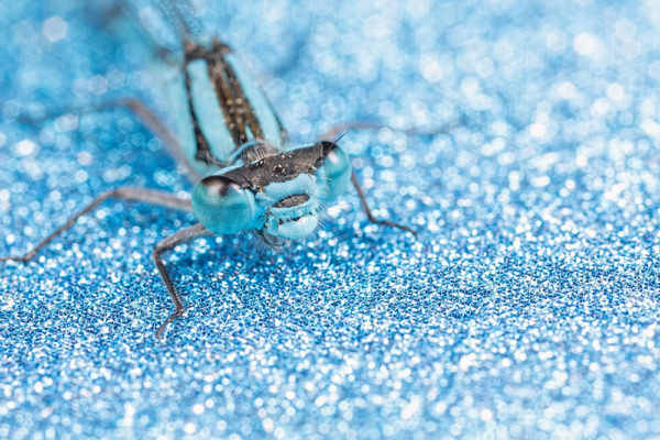 Glittery Blue