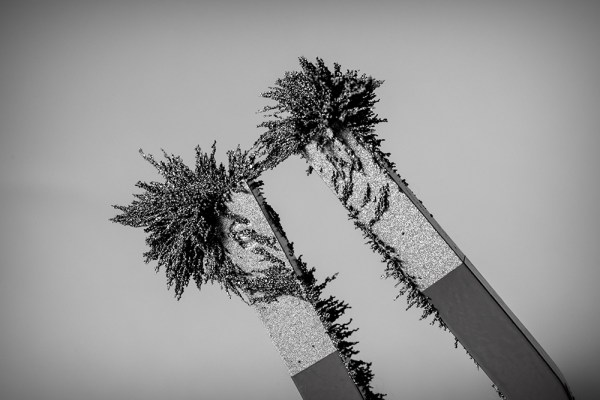Poles Attract in B&W