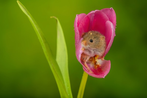 Peaking out of the petals