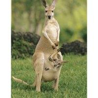 Australia Journal Update 3