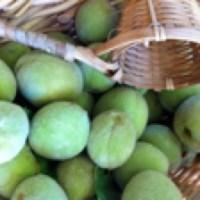 """Peach-boshi"" – Making Umeboshi with Peaches?  (Part 1) by Cynthia Briscoe"