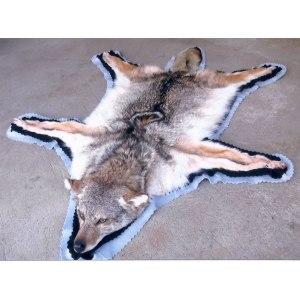 Beautiful Arkansas Wisconsin Wolves Sale Warmland Wolf