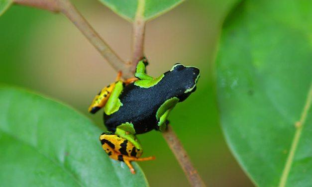 Richesse en biodiversité: Madagascar au top de la biodiversité biologique mondiale
