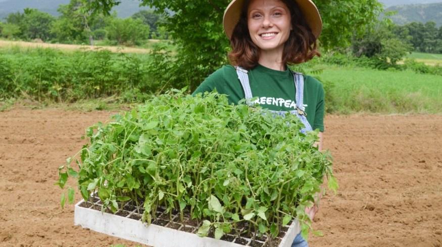 Πώς είναι να φυτεύεις 2.500 ντοματιές με τα ίδια σου τα χέρια