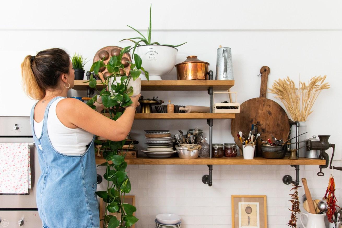 Το φυτό που ομόρφυνε την κουζίνα μου και θέλει ελάχιστη φροντίδα