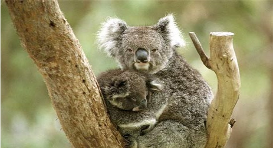 karmic_koala