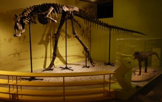 Chile: El Museo Nacional de Historia Natural celebra sus 185 años con inédita publicación sobre vertebrados fósiles