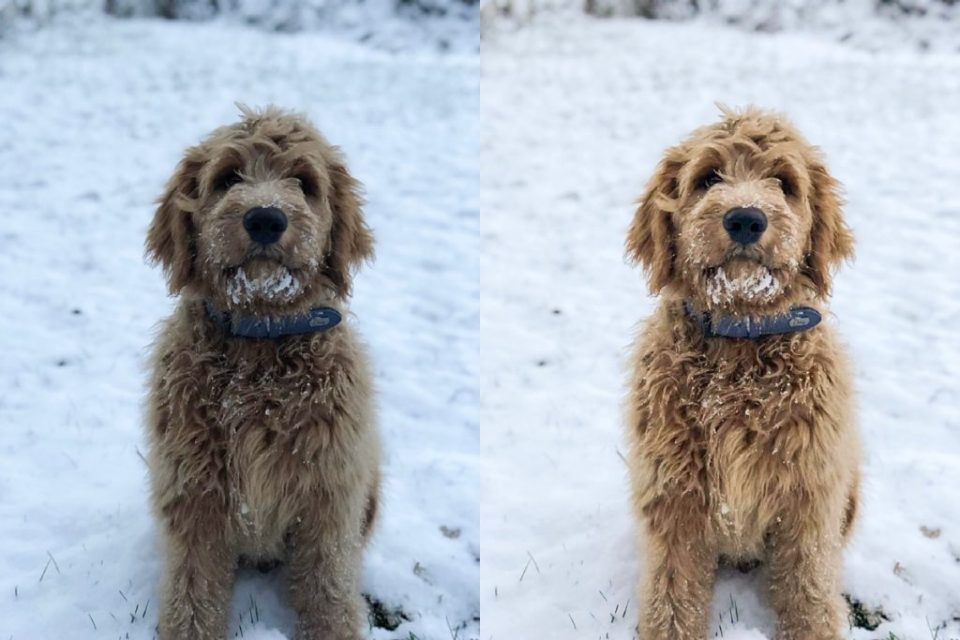 before and after photo edit of dog in snow