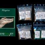 Alligator Larger Panel Peyote Bead Pattern PDF or KIT DIY-Maddiethekat Designs