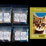 Orange Cat 01 Small Panel Peyote Seed Bead Pattern PDF or KIT DIY-Maddiethekat Designs