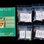 Red Fox 02 with Back Amulet Bag Peyote Seed Bead Pattern or KIT-Maddiethekat Designs