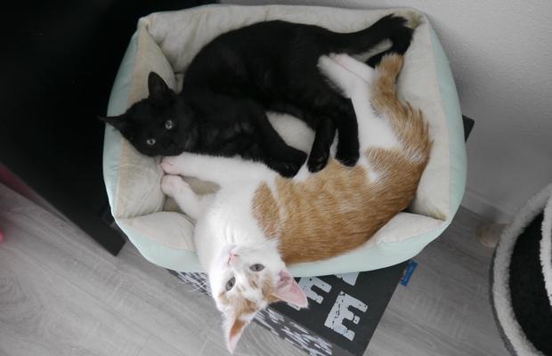 nog een kitten