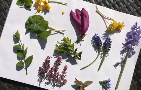 bashed botanical art