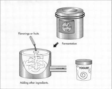 The milk substance is fermented until it becomes yogurt. Fruits and flavorings are added to the yogurt before packaging.