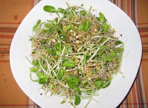 φύτρα Δήμητρα Τυλλιανάκη σουπερ τροφή υγεία διατροφή