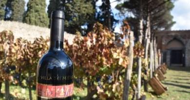 La vendemmia nei vigneti di Pompei. Quest'anno si degusta il vino Villa dei Misteri annata 2012