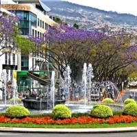 Madeira Portugal Guide PDF Funchal Information