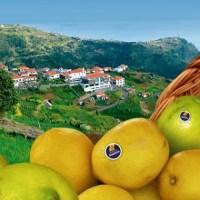 Madeira Lemon Festival
