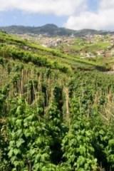 Madeira Weinfeld