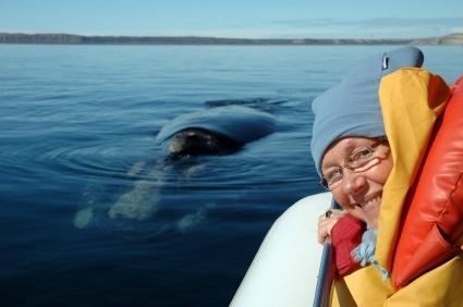 Whalewatching Madeira