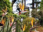 Madeira`s Flora und Fauna