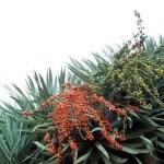 Blumenarten und Baumarten