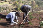 Students help with reforestation